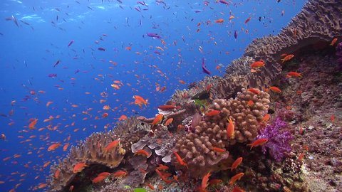 Beautiful underwater scenery current, lots of dramatic action, on shallow coral reef, HD, UP17330