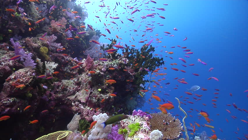 Stock video of beautiful underwater scenery current, lots ...