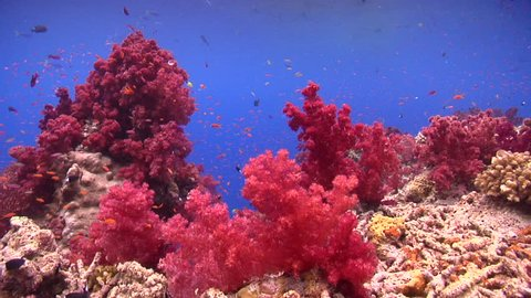 Ocean scenery on shallow coral reef, HD, UP16233