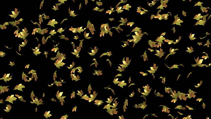 Falling autumn leaves (loop) | Shutterstock HD Video #20152216