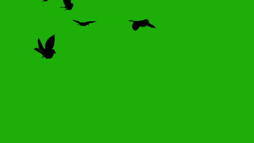 silhouette birds on green screen (for horror movies, halloween) #20581636