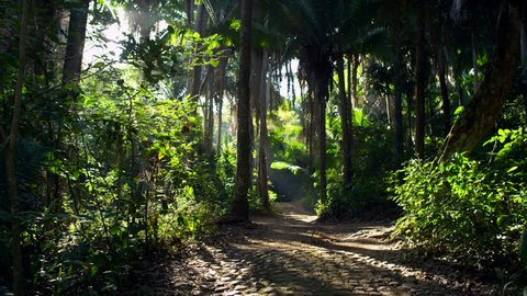 A beautiful cinematic tracking/dolly shot of a gorgeous path running through the jungle/rainforest in Mexico with sunlight peeking through the trees.