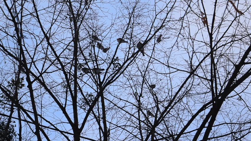 Flock of birds perched in leafless tree, some fly away