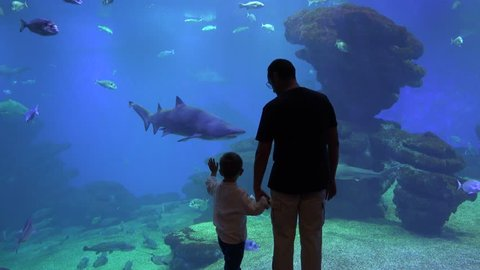 Father and son looking at undersea life in a big aquarium