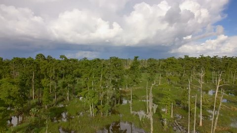 Aerial shot revealing cypress trees in a Louisiana Swamp
