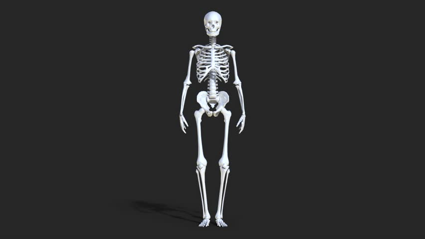skeleton walking animation loop stock footage video 1003852, Skeleton