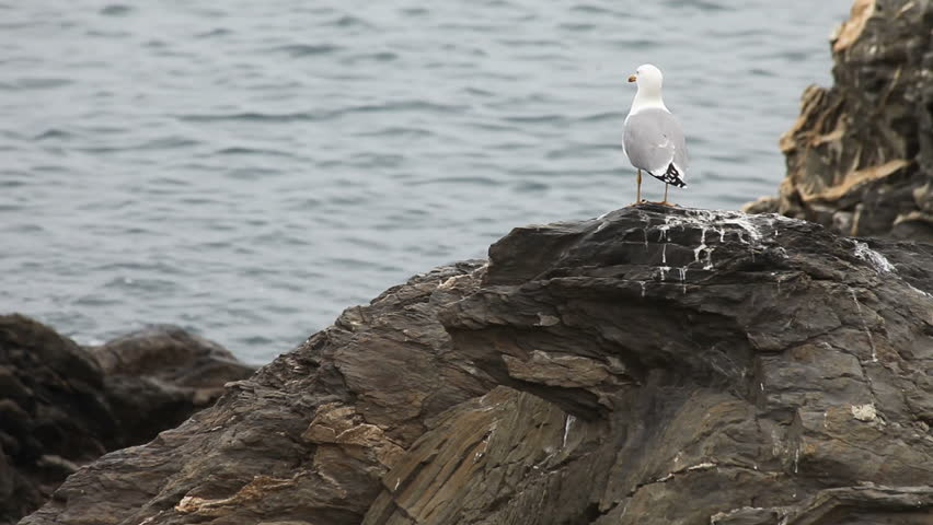 Seagull on rocks by the sea
