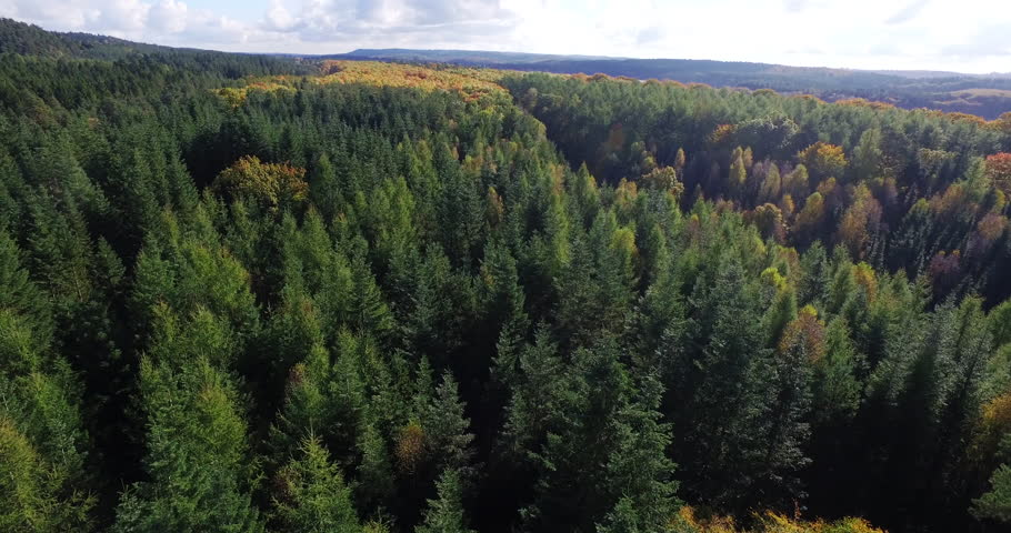 Wilderness - into the wild in a fall forest from a drone perspective