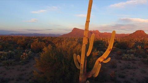 Saguaro Cactus Tucson Desert