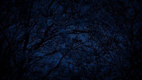Tree In Breeze At Night