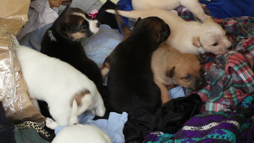 homeless puppies climb on clothes