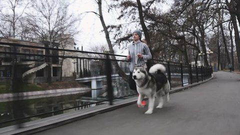 Footage of young girl running with her dog, alaskan malamute