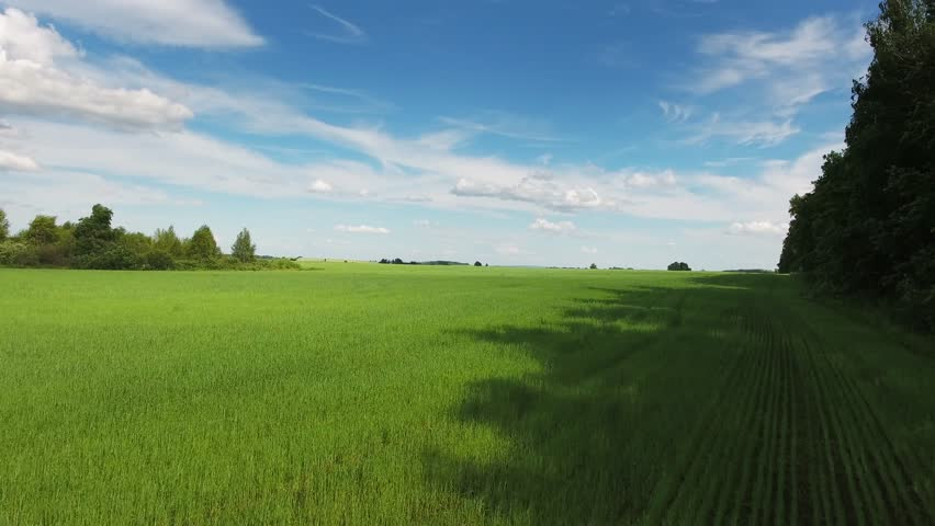 Aerial view on beautiful green field at summer, 4k | Shutterstock HD Video #22298446