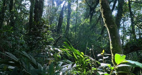 Jungle forest vegetation in green tropical nature in lush of trees and leaves