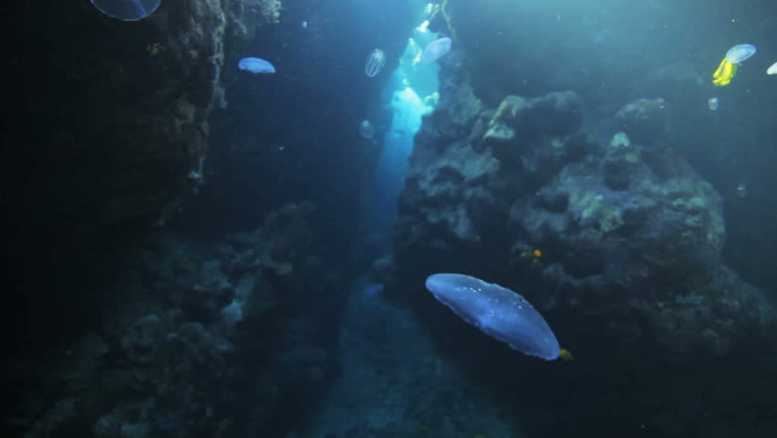 Couple of butter fly feeding on the jelly fish   Shutterstock HD Video #2240536