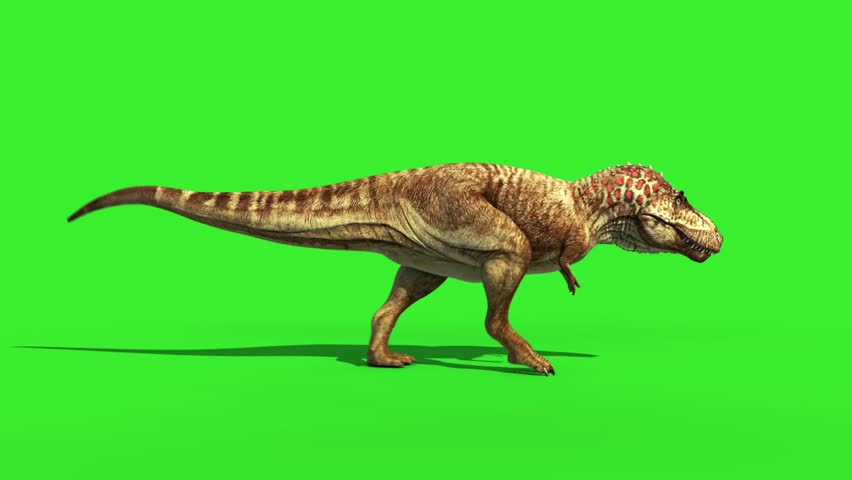T Rex Tyrannosaur Feathered Run Side Loop Jurassic World Dinosaurs Green Screen #22577476
