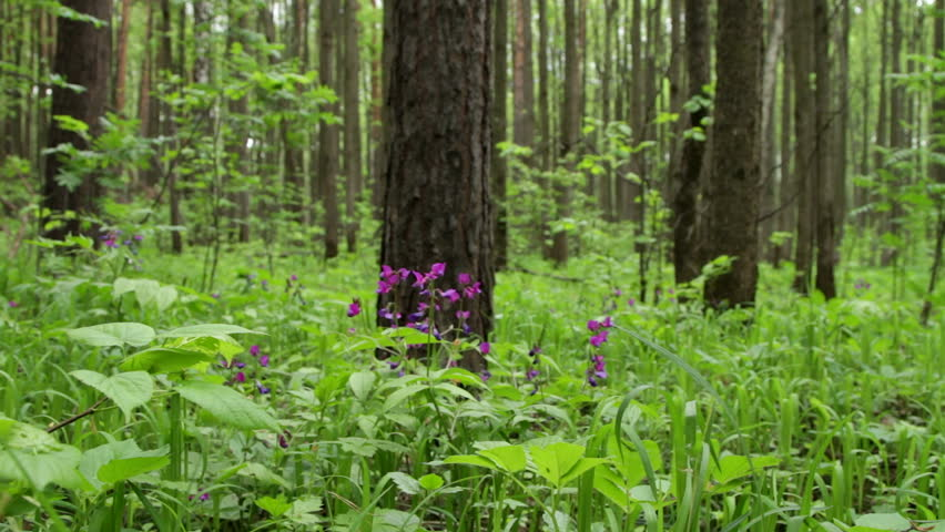 fresh grass and flowers in the spring forest