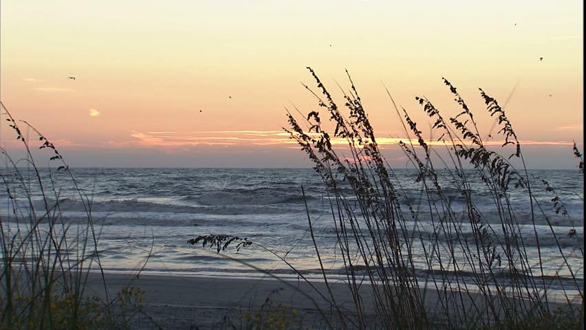 Sunrise on the beach through sea oats, surfers in the water, Hilton Head, SC