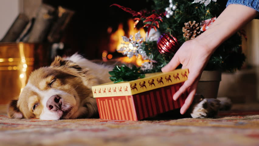 The dog lies near a Christmas tree on the background of a burning fireplace.