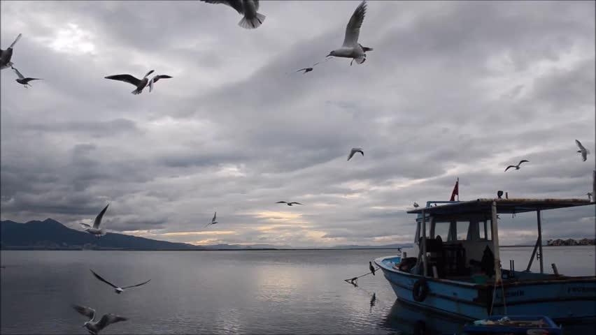 Fishing boat on sea at dusk in Izmir - Turkey. Seagulls flying on the sea.