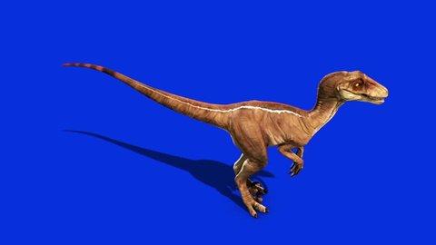 Dinosaurs Velociraptor Looks Around Up Jurassic World Prehistory Blue Screen