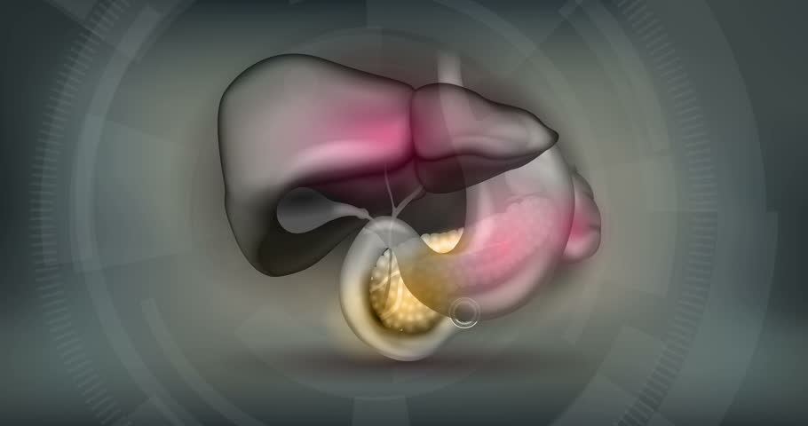 Stones in the Gallbladderand pain, anatomy of surrounding organs bright detailed animated illustration on an abstract technology mesh background