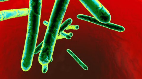 3D rendered animation of Tuberculosis bacterias infecting a body.