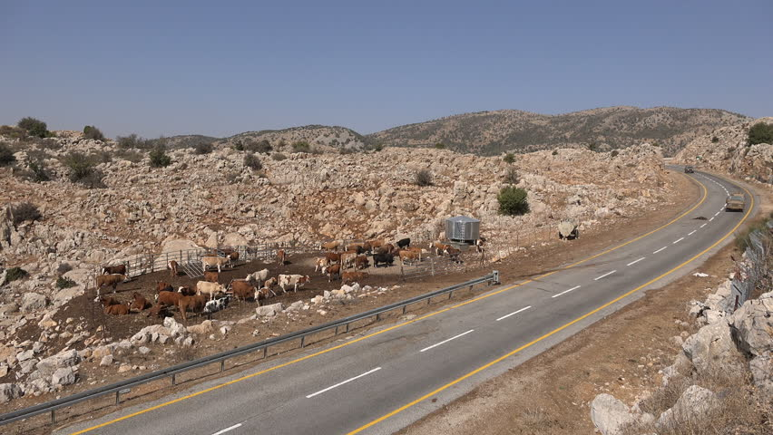 GOLAN HEIGHTS, ISRAEL - NOVEMBER 2016: Israeli military jeeps drive past small cattle farm on the Golan Heights near the border with Syria  | Shutterstock HD Video #23165236