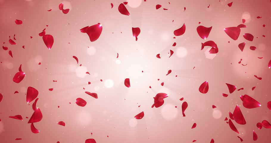 animation of flying flower petals backdrop
