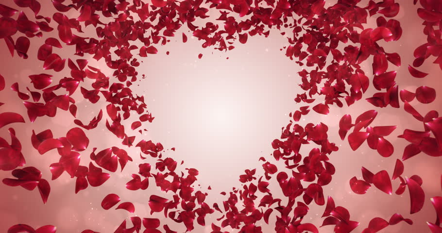 Animation of romantic flying light red rose flower petals backdrop