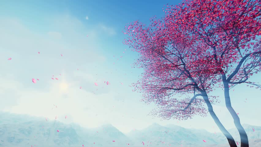 Flowering sakura cherry tree and flower petals falling from treetop in slow motion against sunny sky and foggy mountains at spring day. Realistic 3D animation rendered in 4K