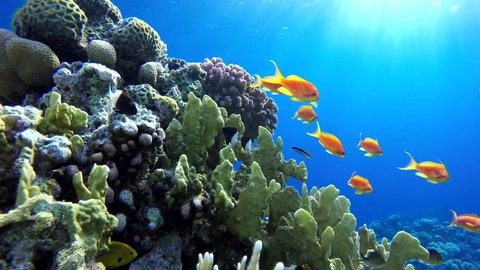 Coral reef, tropical fish. Warm ocean and clear water. Underwater world.