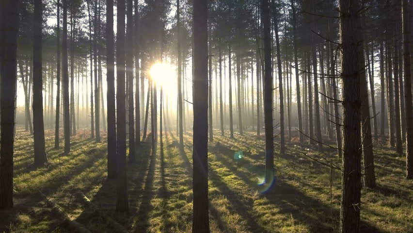 Mystical forest: sun rays shining through trees. Smooth movement from right to left.  #23552086