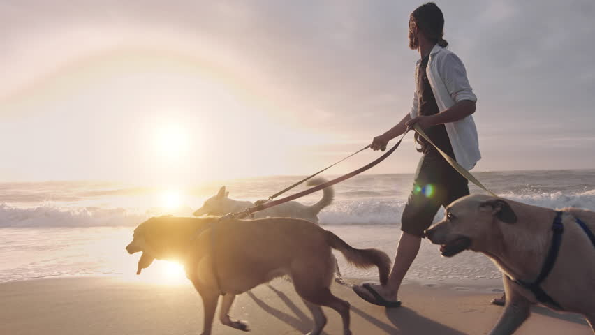 4k Happy man young running/walking with dogs on beach lifestyle steadicam shot at sunrise with sun flare.