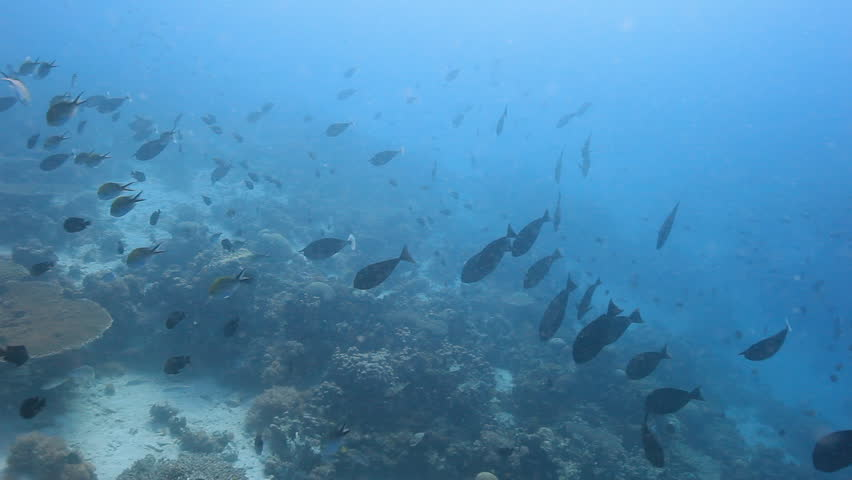 Schools of Fish Swimming Among Stock Footage Video (100% Royalty-free)  23823556 | Shutterstock