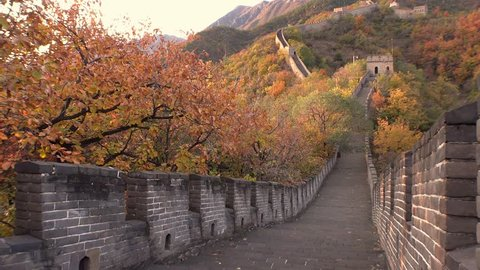 The Great Wall of China. Majestic mountain vista. Beijing Mutianyu. Ancient historic site. Autumn orange sunset, yellow green tree. Forward pass gimbal walk drift