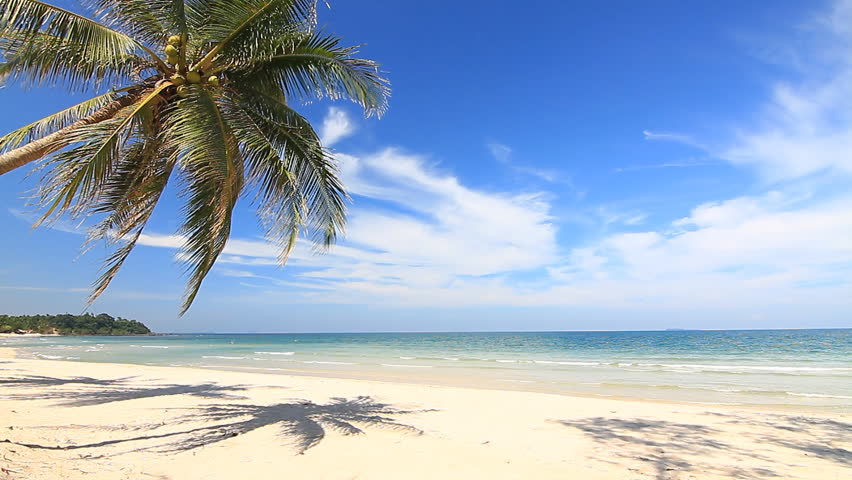 Shore Palms Tropical Beach 4k Hd Desktop Wallpaper For 4k: Two Palms On Beautiful Tropical Beach Stock Footage Video