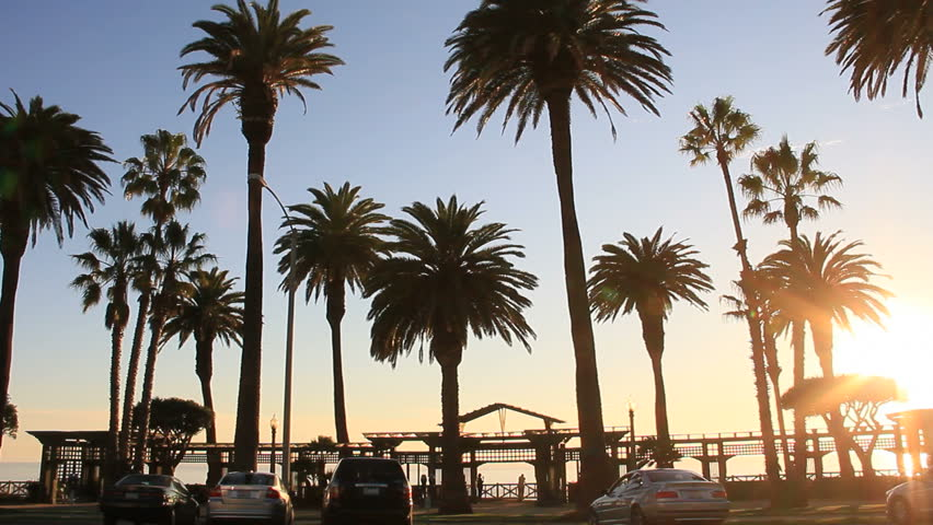 Palm Trees line Ocean Blvd in Santa Monica, CA. Traffic and Activity at sunset hour. | Shutterstock HD Video #2431316