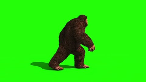 Bigfoot Sighting Walk Loop Green Screen 3D Rendering Animation