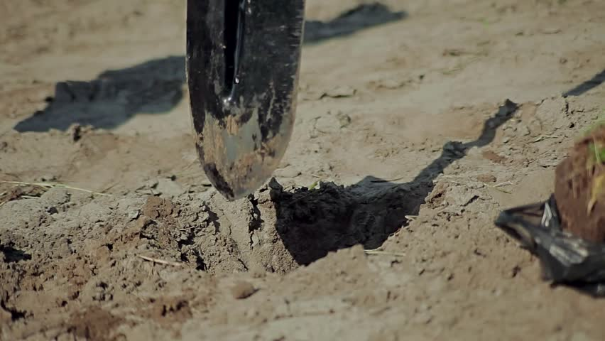 Man digging with a shove / Planting young tree by kid hand on back soil as care and save wold concept | Shutterstock HD Video #24590816