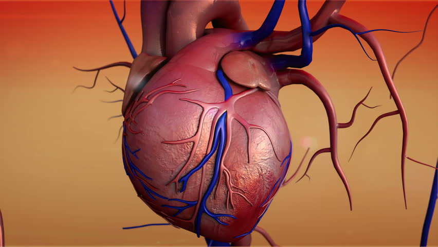 Human heart, Human heart model, Full clipping path included, Heart Anatomy, 4K animation of Human heart - 4K stock footage clip