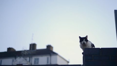 A black and white cat is sitting on a fence and looking at the camera