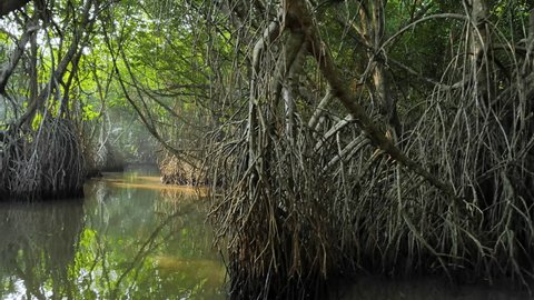 POV video of camera moving forward in natural tunnel of river canal near swamps and wetlands of mangrove forest