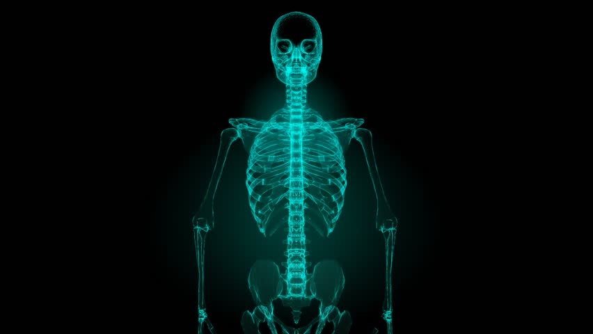 x-ray scan of human skeleton (hd) stock footage video 2209567, Skeleton