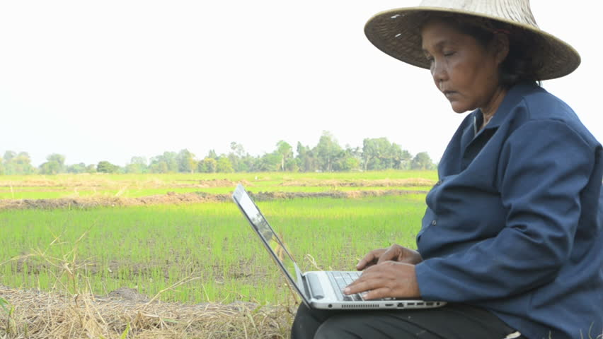 Asian Thai farmer using laptop computer in the rice field