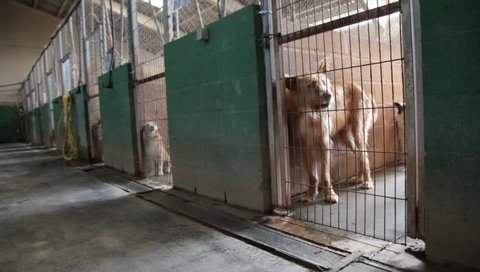 Abandoned dogs, detail of some animals in cages, homeless animals, adoption
