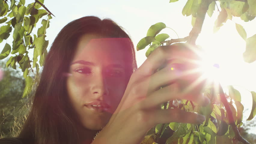 Close-up shot of beautiful girl picking an apple from a tree #25149566