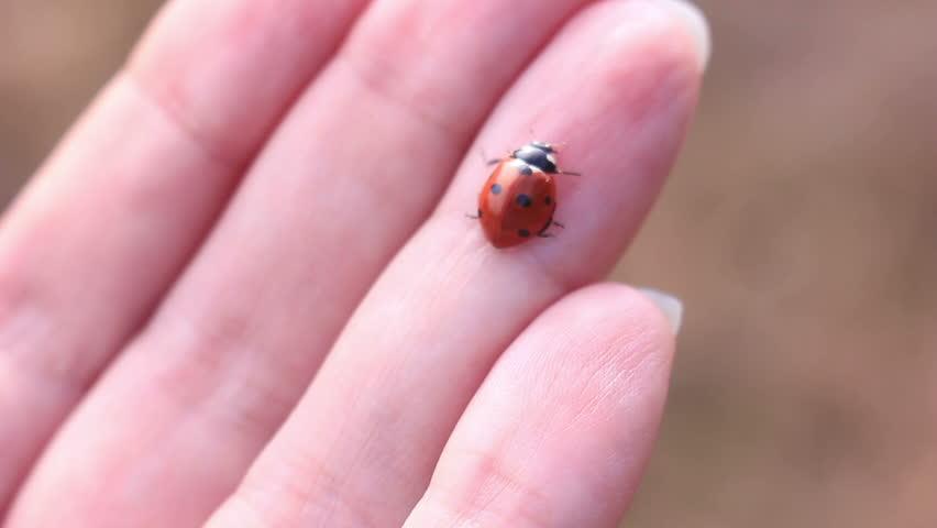 Ladybird Hand Crawling Ladybug Macro
