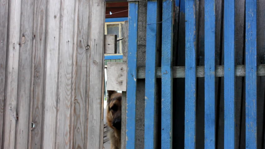 Barking dog behind fence