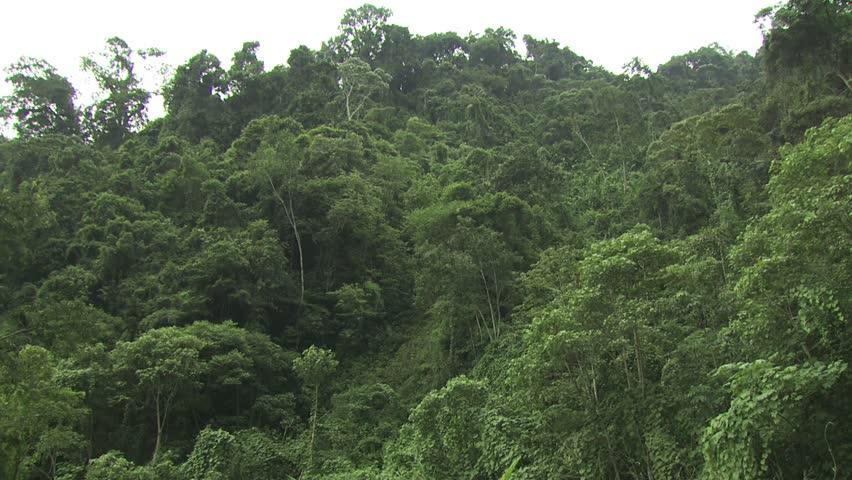 Canopy of the Amazon Rainforest 2